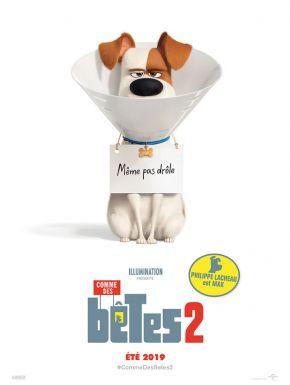 Sortie DVD Comme Des Bêtes 2