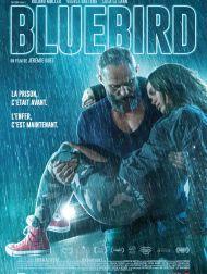 sortie dvd  Bluebird