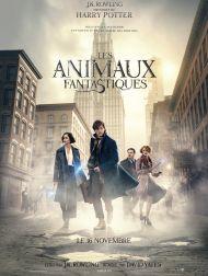 sortie dvd  Les Animaux Fantastiques