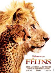 sortie dvd  Félins - Le Royaume Du Courage