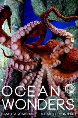 Télécharger Ocean Wonders : Dans L'Aquarium De La Baie De Monterey