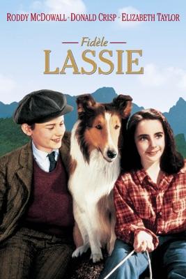DVD Fidèle Lassie