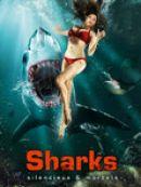 Télécharger Sharks Silencieux & Mortels