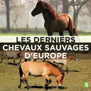 Les derniers chevaux sauvages d'Europe torrent magnet