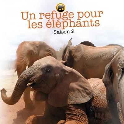 Un refuge pour les éléphants, Saison 2 torrent magnet