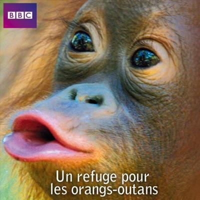 Un refuge pour les orangs-outans torrent magnet