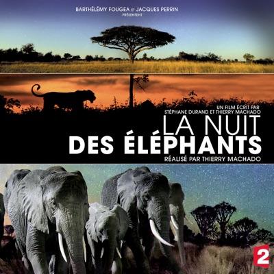 La nuit des éléphants torrent magnet