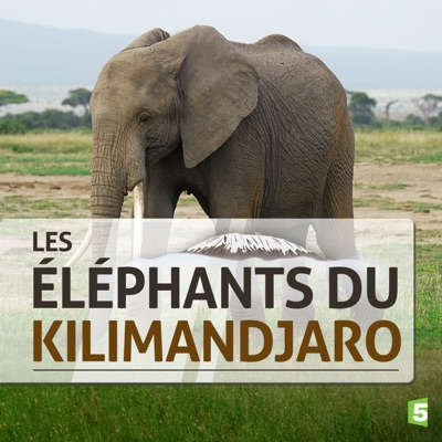 Les éléphants du Kilimandjaro torrent magnet