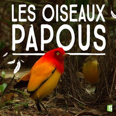 Les oiseaux papous torrent magnet