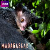 Madagascar, Saison 1 torrent magnet