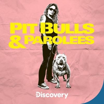 Pit Bulls and Parolees, Season 18 torrent magnet