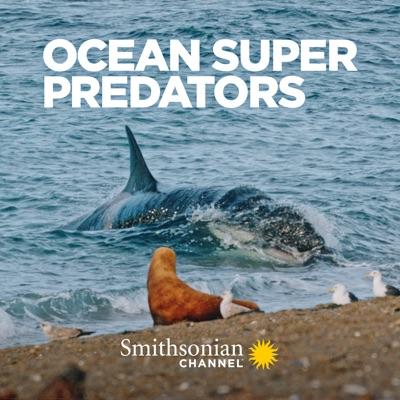 Ocean Super Predators torrent magnet