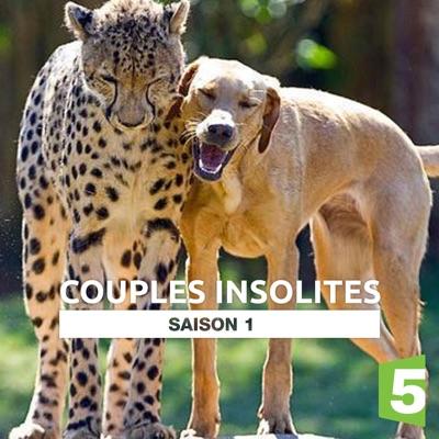 Couples insolites torrent magnet
