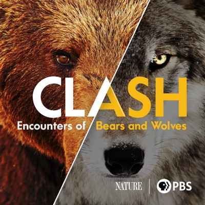 Clash: Encounters of Bears and Wolves torrent magnet
