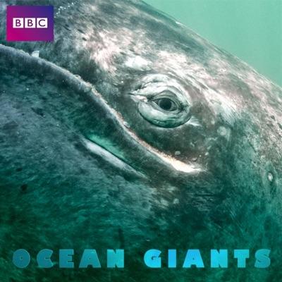 Ocean Giants, Series 1 torrent magnet