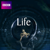 Life, Life: L'aventure de la vie torrent magnet