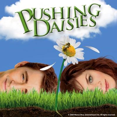 Pushing Daisies, Saison 1 torrent magnet