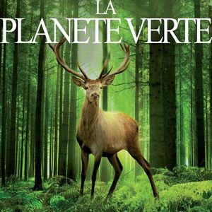 La planète verte, au royaume de la forêt torrent magnet
