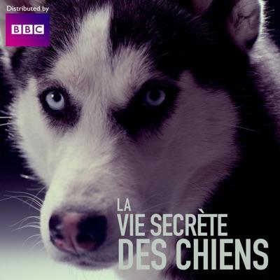 La vie secrète des chiens torrent magnet