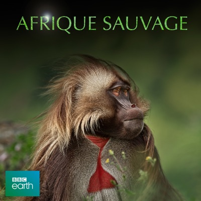 Africa, Afrique Sauvage torrent magnet