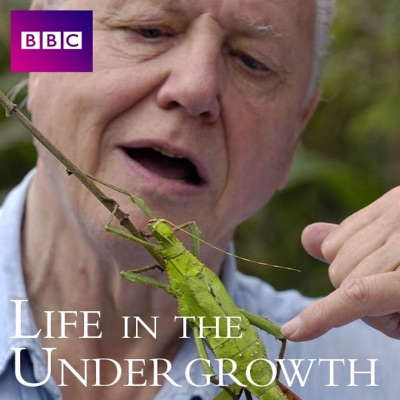 Life In the Undergrowth, Series 1 torrent magnet