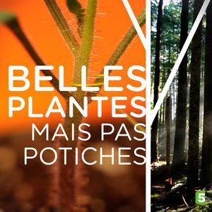 Belles plantes mais pas potiches torrent magnet
