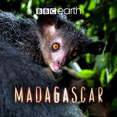 Madagascar, Series 1 torrent magnet