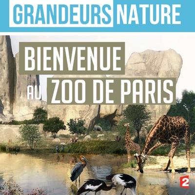 Grandeurs nature : Bienvenue au zoo de Paris torrent magnet