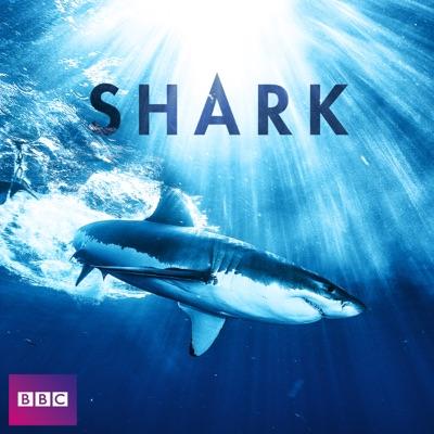 Shark, Series 1 torrent magnet