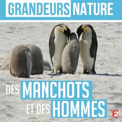 Grandeurs nature : Des manchots et des hommes torrent magnet