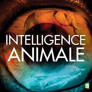 Intelligence animale torrent magnet
