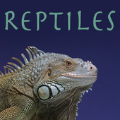 Reptiles, Saison 1 torrent magnet