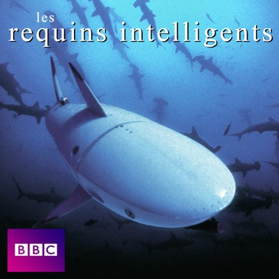 Les requins intelligents torrent magnet
