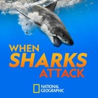 When Sharks Attack, Season 7 à télécharger