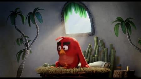 Voir Angry Birds: Le Film en streaming