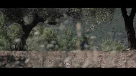 L'Olivier streaming