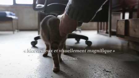 Voir Kedi - Des Chats Et Des Hommes en streaming