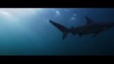 Deep Blue Sea 3 en streaming