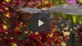 Clochette Et Le Secret Des Fées streaming