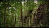 La Loi De La Jungle streaming