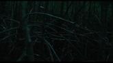 Manta Ray streaming